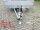 Eduard 3000 KG Multitransporter - Gebremste Doppelachser - 4.0x2.0m - Ladehöhe:63 cm - 195/50R13 - Auffahrschienen & Winde - Bordwände 30cm
